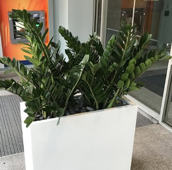 Tropical Plant Leasing in Miami Florida