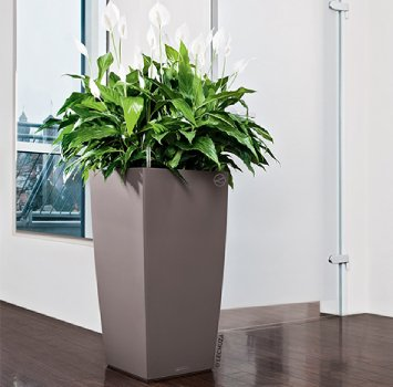 Office Plant Maintenance and setup Company
