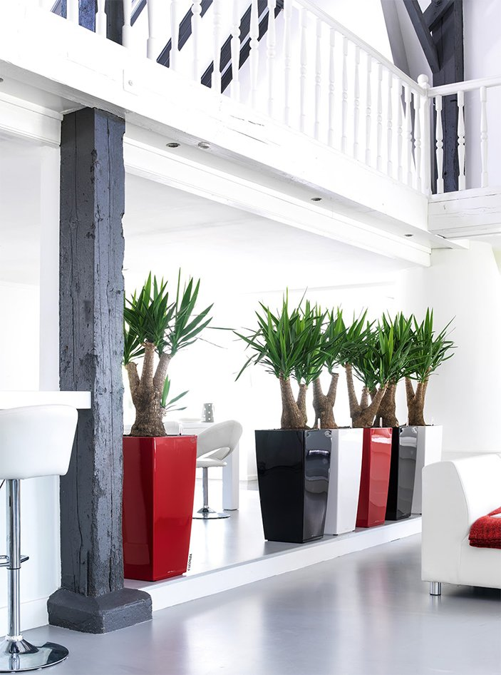 tropical-plant-leasing-gallery-plants-plant-containers