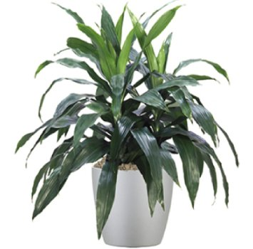 tropical-plant-leasing-low-light