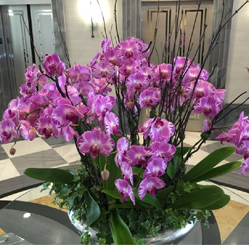 tropical-plant-leasing-orchids-potted-orchid-leasing company