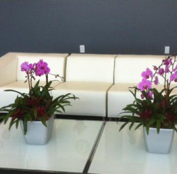 tropical plant leasing orchids potted-orchid-displa